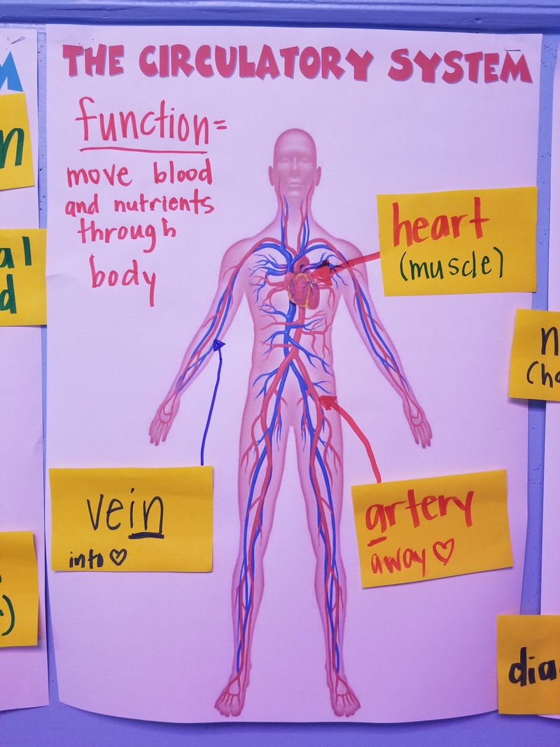 Human Body Systems - South Greenville 5th Grade